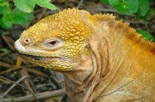 lizard-298404_1920ss